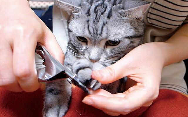 の 切り 猫 爪
