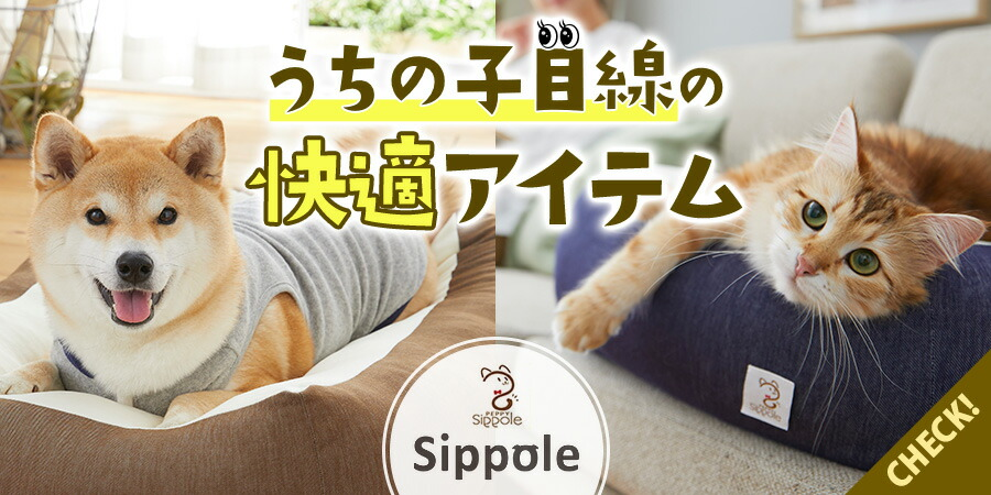 Sippole