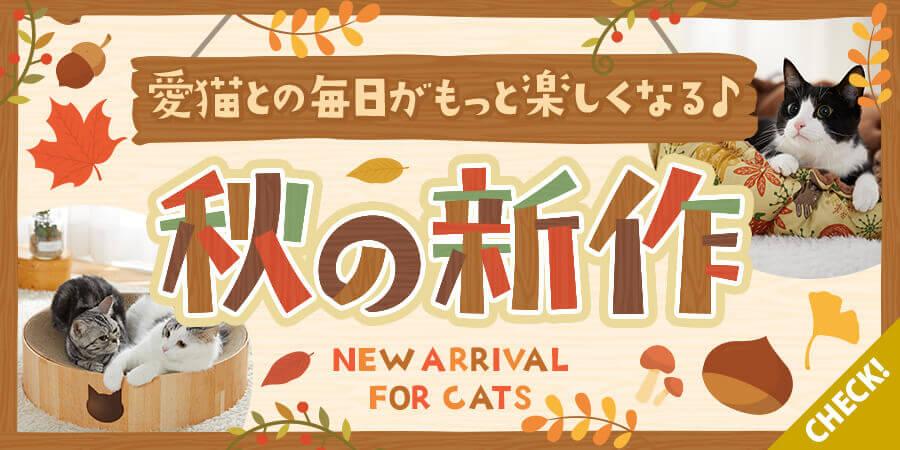 秋の新作猫