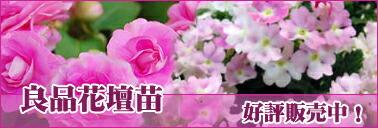良品花壇苗