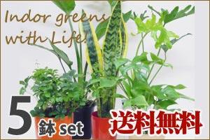 5個観葉植物セット
