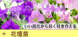 【特集2】オリジナル&おすすめ花壇苗