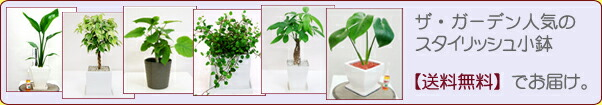 観葉植物スタイリッシュ小鉢