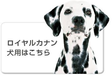 食事療法食ロイヤルカナン犬用