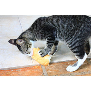 猫用おやつの与え方のコツ