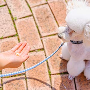 犬用おやつの頻度や与え方