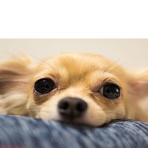 ペット用クッションやマットやベッドの役割