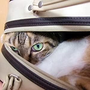 猫におすすめのキャリーバック