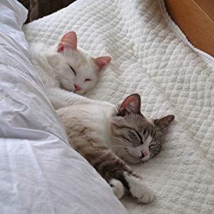 ペット用クッションやマット、ベッドの選び方