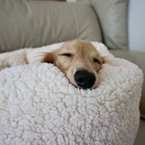 ペット用クッションやマット、ベッドの役割