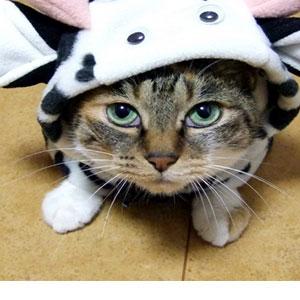 猫に服を着せるメリット