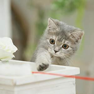 猫におもちゃを与える意味