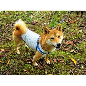 犬に服を着せる利点は