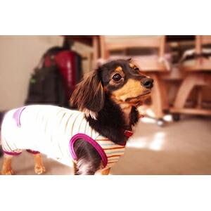 犬の服のサイズ