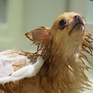 犬の毛のお手入れの必要性