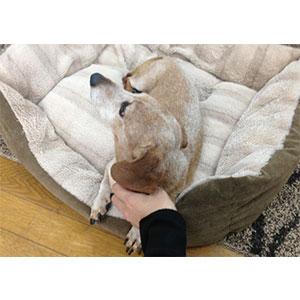 犬用ベッドの必要性