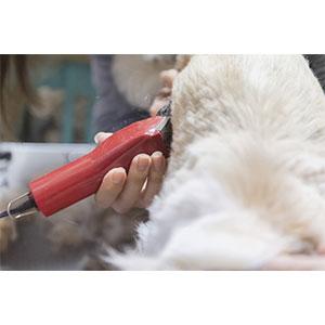 犬用バリカンを使う際の注意点