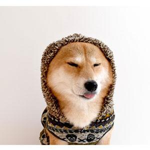 犬に服を着せる利点