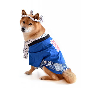 犬の服の選び方やサイズの測り方