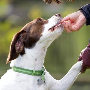犬のおやつの選び方