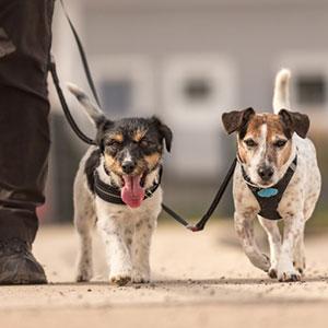 犬用リードや首輪の選び方