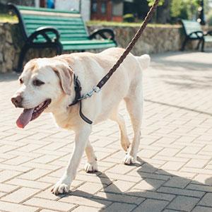 散歩時の犬用リードの使い方