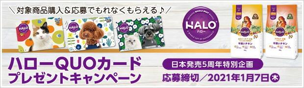 ハロー商品購入&応募でQUOカードプレゼントキャンペーン