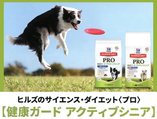 プロアクティブシニア犬_1