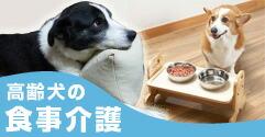 高齢犬の食事介護
