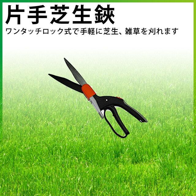 キンボシ芝のお手入れ芝生鋏刈り込み