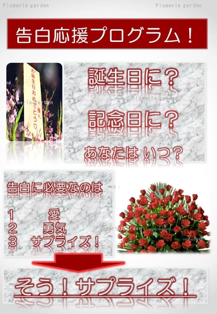 https://image.rakuten.co.jp/plumeria/cabinet/04646170/ppr/pprbn1.jpg