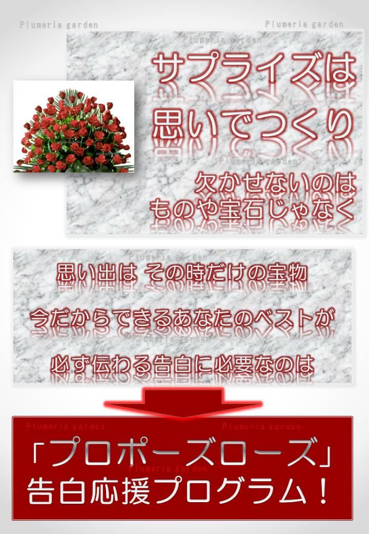https://image.rakuten.co.jp/plumeria/cabinet/04646170/ppr/pprbn2.jpg