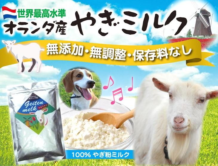 世界最高水準 オランダ産 やぎミルク 無添加・無調整・保存料なし