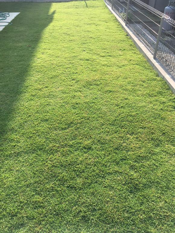 芝刈り後イメージ