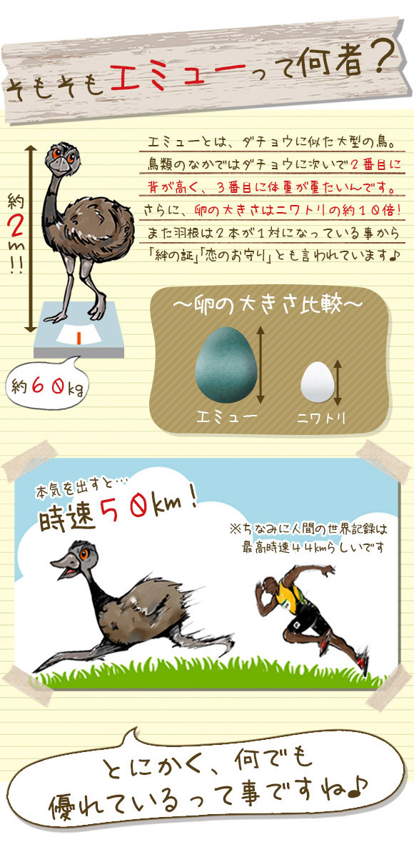 大型の鳥エミュー