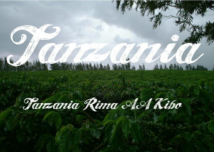 タンザニア リマ AA キボ—