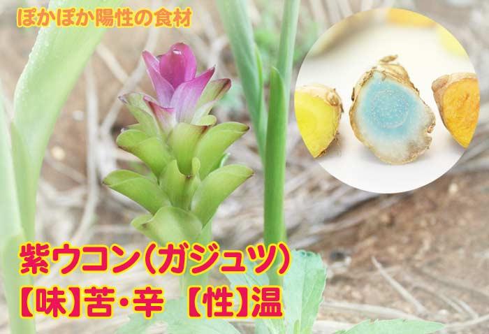 ぽかぽか陽性の種子島産紫ウコン(ガジュツ)粉末
