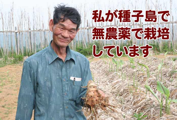 私が種子島で無農薬栽培しています