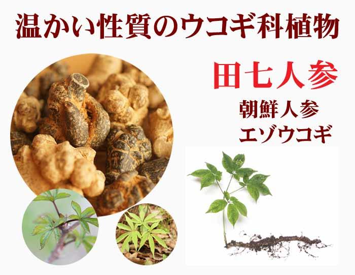 温かい性質のウコギ科植物