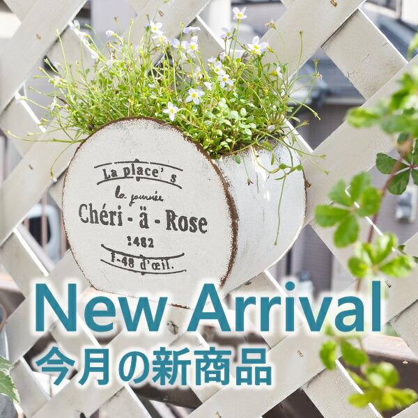 New Arrival6月の新商品バナー