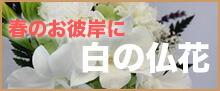 春のお彼岸に白い仏花