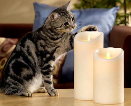 火を使わないLEDキャンドル ルミナラだからペットも安心