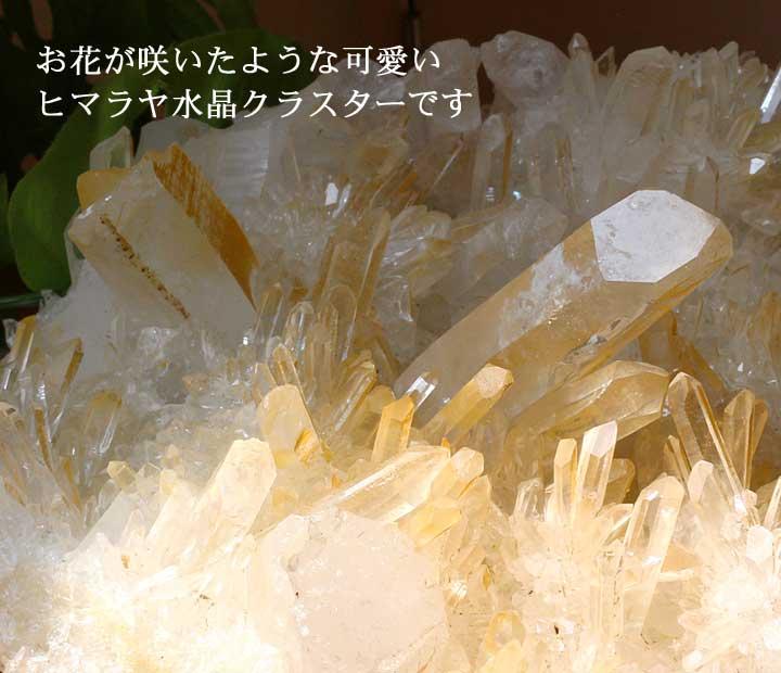 カンチェンジュンガ産ヒマラヤ水晶クラスター38のおすすめポイントをアップにして撮影