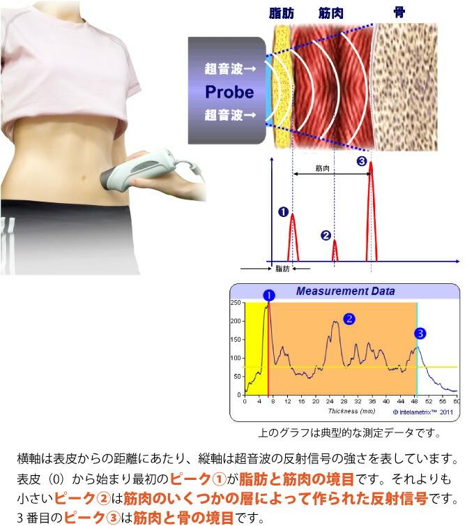 BodyMetrix超音波計測のしくみ