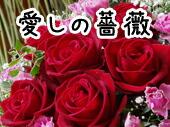 愛しの 薔薇 バラ