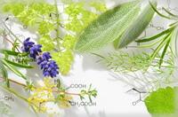 酵素栄養学