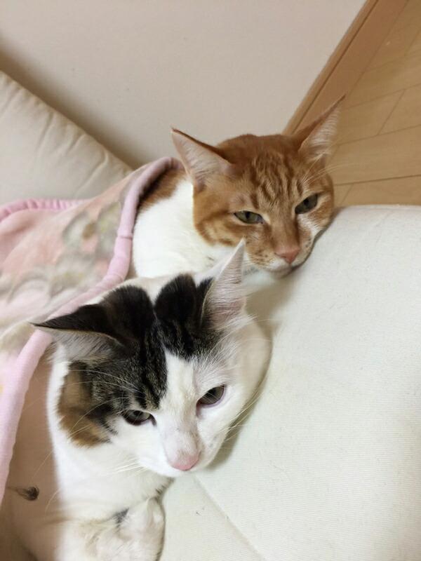 ラディアンヌ店長の猫たち