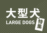 大型犬サイズ特集