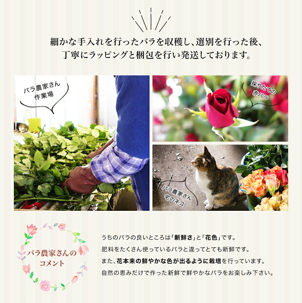 細かな手入れを行ったバラを収穫し、選別を行った後、丁寧にラッピングと梱包を行い発送しております。