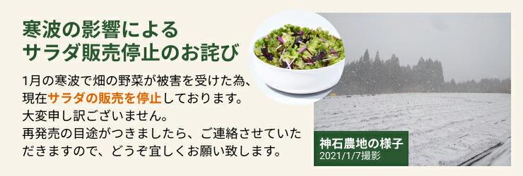 寒波の影響によるサラダ販売停止のお詫び